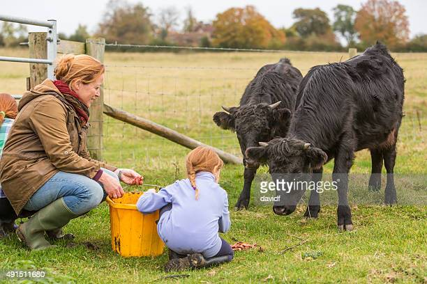 Young Girls and Mother Feeding Cows on an Organic Farm