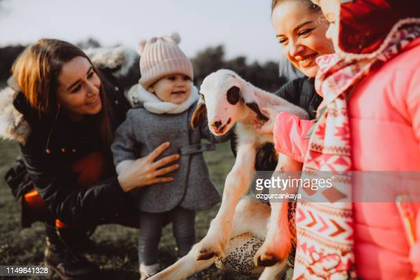 young girls and mother feeding sheep on an organic farm - simple living stock pictures, royalty-free photos & images