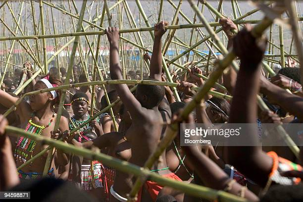 Young girls and women scramble to get reeds at the Zulu royal palace in Nongoma at the Zulu royal palace in Nongoma KwaZulu Natal South Africa on...