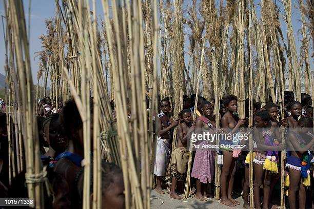 Young girls bring reeds at a traditional Reed dance ceremony at the Royal Palace on August 30 in Ludzidzini Swaziland About 80000 virgins from all...