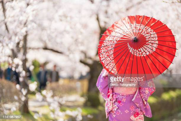 young girls, dressed in kimono with red umbrella standing with cherry blossom background. - japan stockfoto's en -beelden