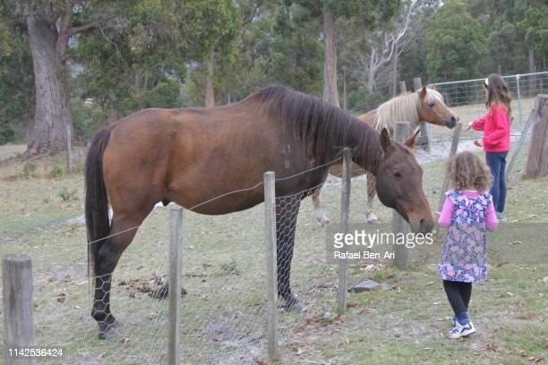 young girls petting a horse - rafael ben ari stockfoto's en -beelden