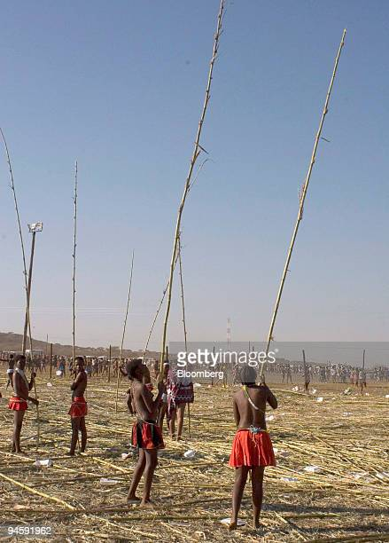 Young girls select reeds to parade with at the Zulu royal palace in Nongoma KwaZulu Natal South Africa on Saturday Sept 8 2007 Thousands of virgin...
