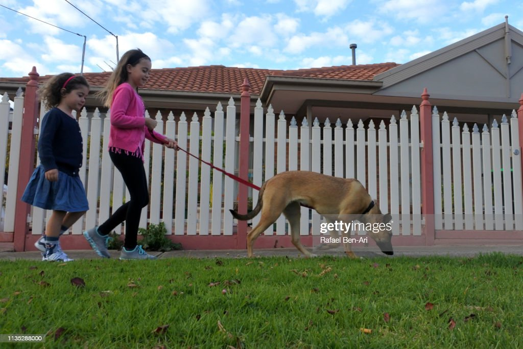 Young girls walking a dog in the street : Stock Photo