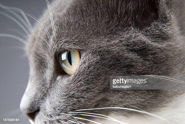 gray pussy pics