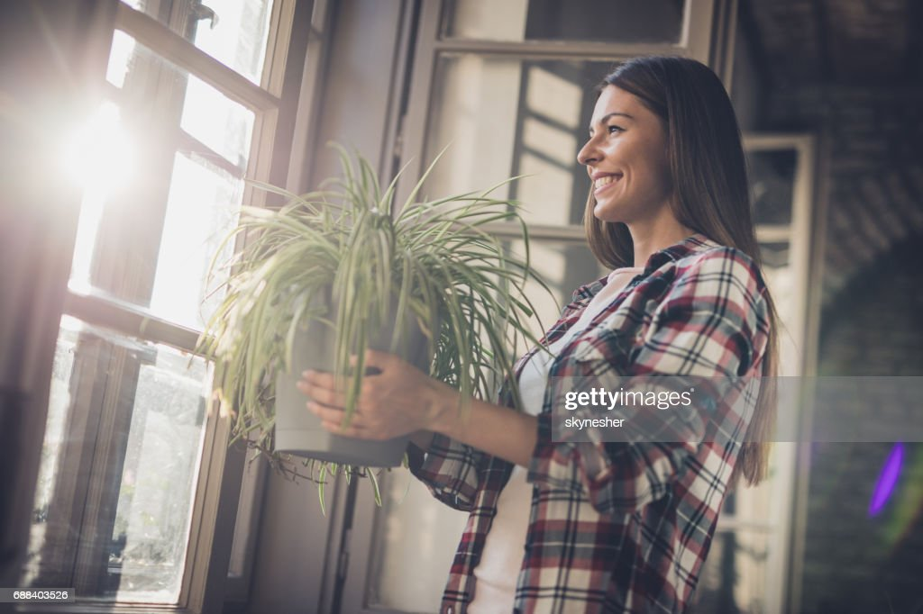 Young happy woman with spider plant by the window. : Stock Photo