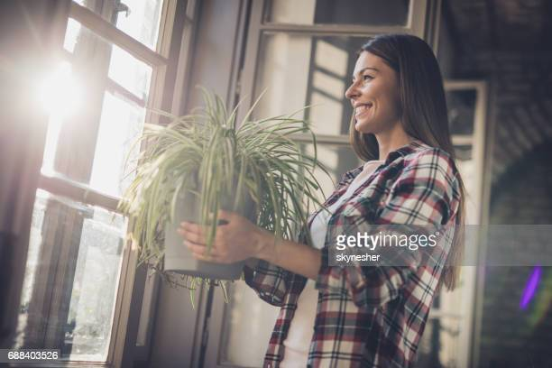 young happy woman with spider plant by the window. - ornato foto e immagini stock