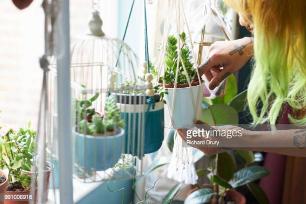 young hipster woman tending to her succulent house plants - houseplant stock pictures, royalty-free photos & images