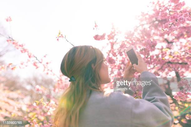 young hispanic woman taking picture of cherry blossoms using smart phone - cherry blossom in full bloom in tokyo stock pictures, royalty-free photos & images