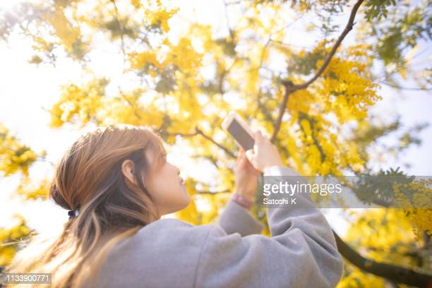 young hispanic woman taking picture of mimosa blossoms using smart phone - mimosa fiore foto e immagini stock