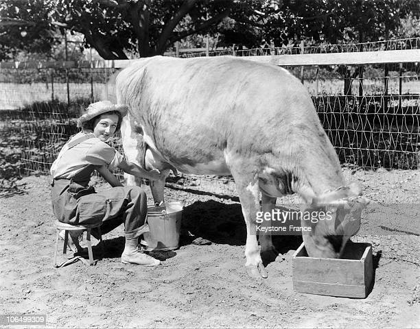 Young Hollywood Actress Ann Dvorak Milking A Cow On Her Farm In The Area Around Los Angeles In 1929