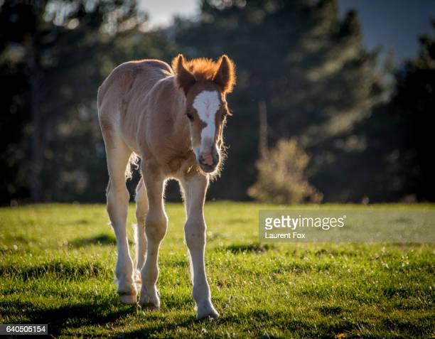 A young horse wanders freely in the mountains at dusk above Valle de Hecho, Spain.