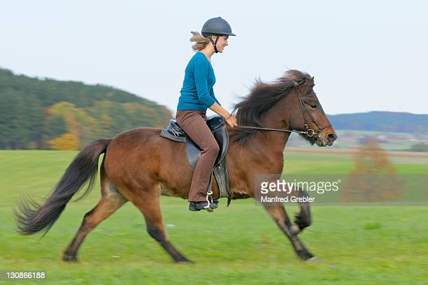 Young horsewoman in autumnal ride on Icelandic horse in gallop