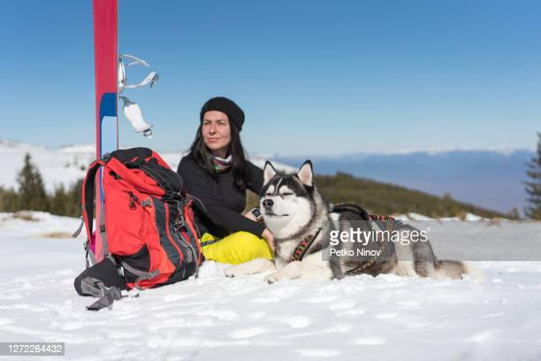 young husky dog enjoying the winter sun - silver shoe stock pictures, royalty-free photos & images