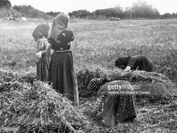 Young Hutterite girls working in a field on the colony Northeast Alberta Canada 1963 Photo taken during the National Film Board of Canada's...