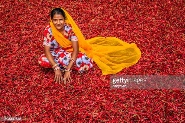 young indian woman sorting red chilli peppers, jodhpur, india - india stock pictures, royalty-free photos & images