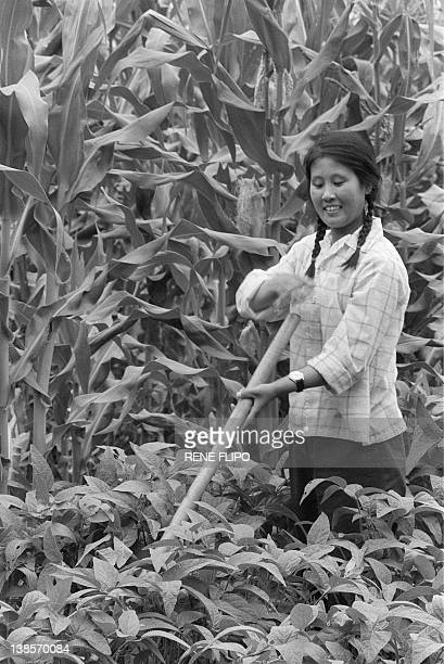 A young intellectual woman working in June 1974 a field in a state farm in Harbin as she takes part in a political reeducation program