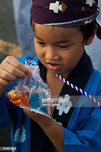 A young Japanese boy admires his goldfish at the local shrine festival Matsuri is the Japanese word for a festival or holiday In Japan festivals are...