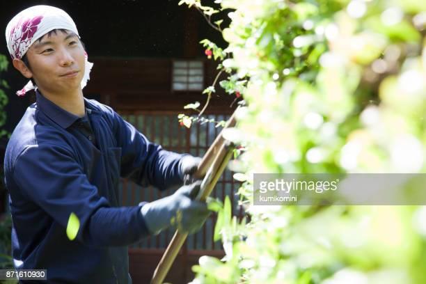 若い日本人庭師