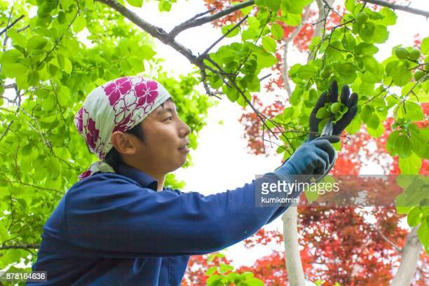 若い日本人庭師 - 造園師 ストックフォトと画像