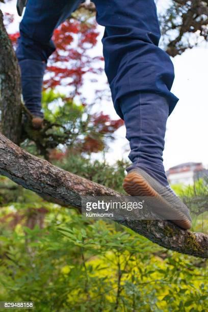 若い日本人庭師剪定松の木 - 造園師 ストックフォトと画像