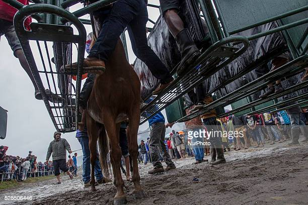 Young jockey acehnese ready to start on the box start during a traditional horse racing competition in Takengon Central Aceh Indonesia August 23 2014...