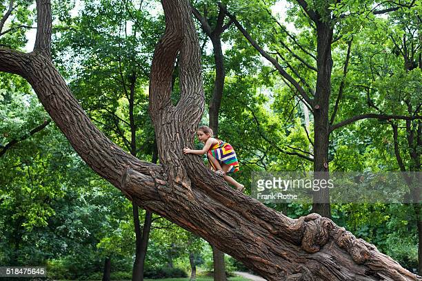 young kid climbs at a great and old tree
