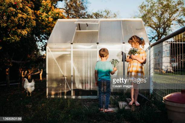 young kids standing outside backyard green house holding flowers - golden hour stock pictures, royalty-free photos & images