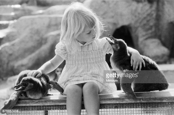 Young Kirsten Ogilvie with two baby penguins at the Cotswold WildLife Park in Oxfordshire 4th September 1981