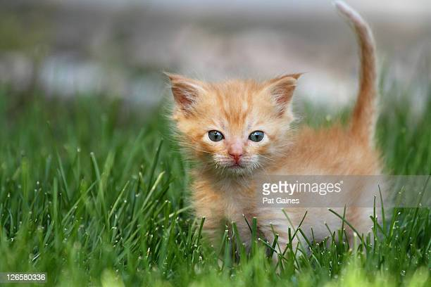 Young kitten standing on grass