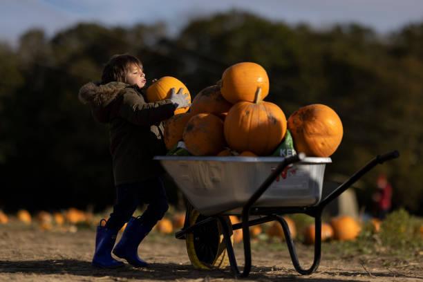 GBR: Pumpkin Pickers Visit Tulleys Farm Ahead Of Halloween