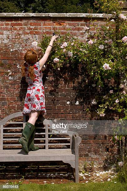 young lady pruning  roses.