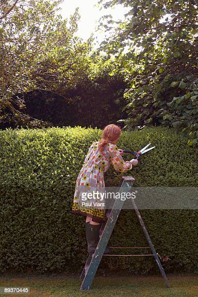 young lady standing on ladder trimming hedge