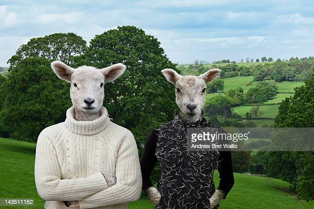 young lamb couple pose together in the countryside - animal representation stock pictures, royalty-free photos & images