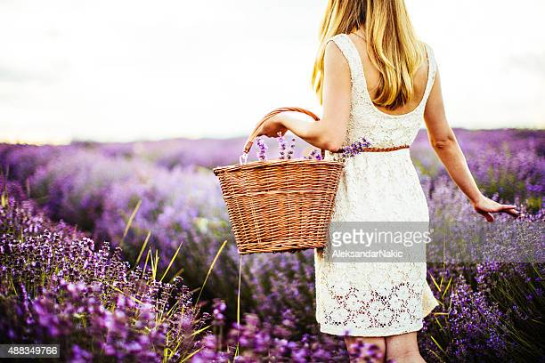 Young lavender picker