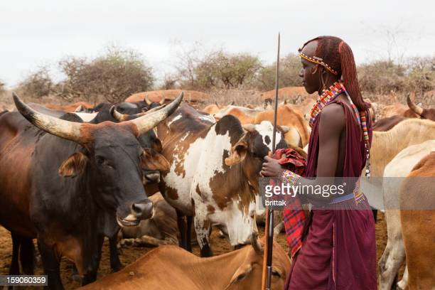 Young Maasai warrior (moran) with cattle in background,