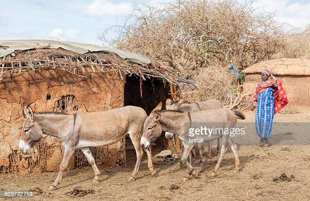 Young Maasai woman with donkeys in village.