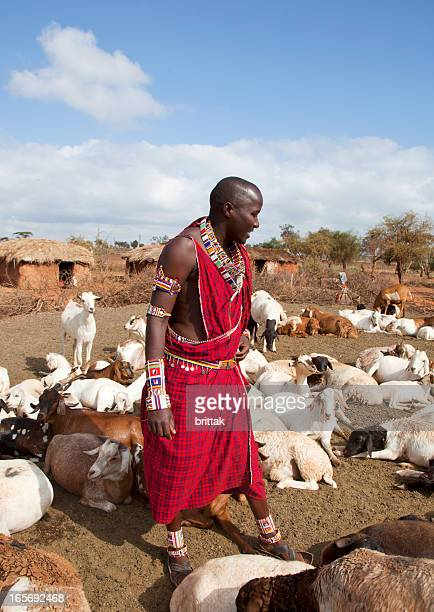 Young maasaj with traditional jevellry hearding goats.