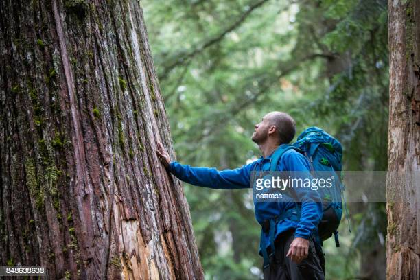 Young male admiring the ancient cedars