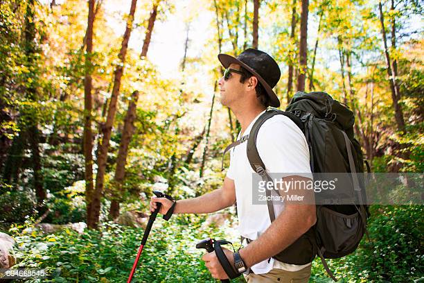 Young male hiker hiking in forest with walking poles, Arcadia, California, USA