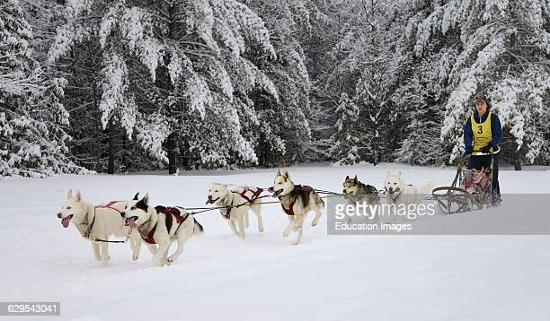 60 Top Sledge Dog Race Training Pictures, Photos, & Images