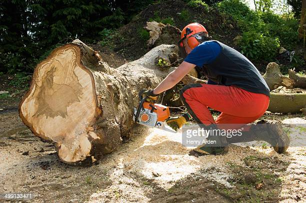 Young male tree surgeon kneeling whilst using chainsaw
