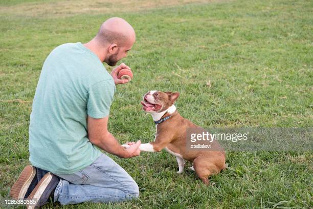 young man and his dog in the park. - stellalevi stock pictures, royalty-free photos & images