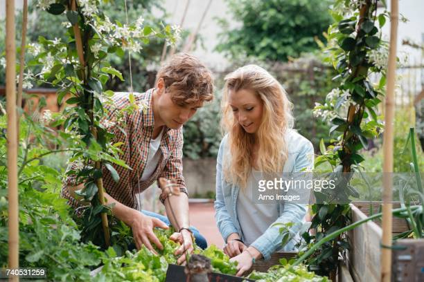 young man and woman tending to plants in wooden troughs - 飼い葉桶 ストックフォトと画像