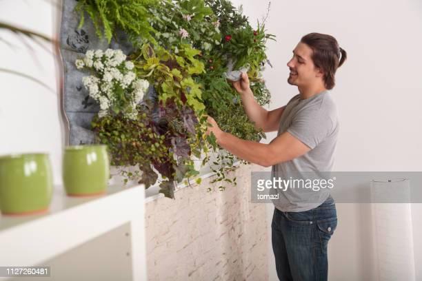 young man attending his vertical garden at home - environmental issues imagens e fotografias de stock