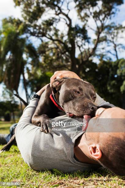 Young man being licked by his pit bull at the park.