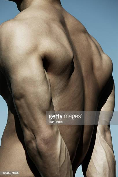 young man body close-up,back - human back stock photos and pictures