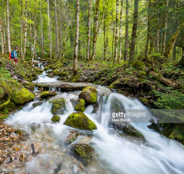 Young man by a creek, Roethbach, with mossy stones, river at the end of Roethbach Waterfall, Salet am Koenigssee, National Park Berchtesgaden, Berchtesgadener, Upper Bavaria, Bavaria, Germany