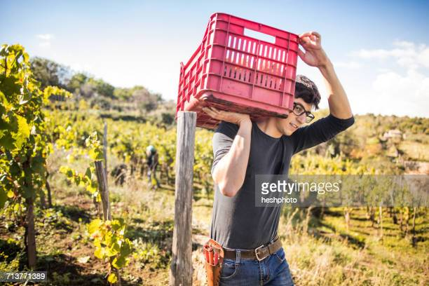 young man carrying grape crate on shoulder in vineyard - heshphoto photos et images de collection