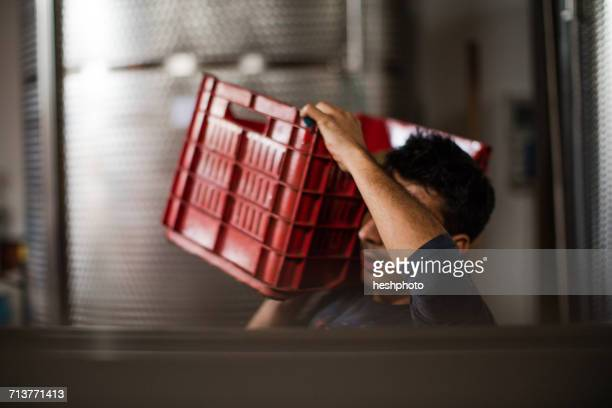 young man carrying harvested grapes in vineyard crate on shoulder - heshphoto photos et images de collection